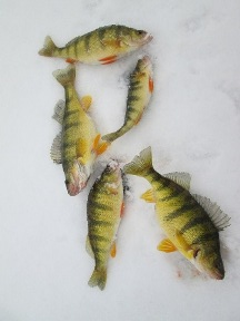 ice-perch-1